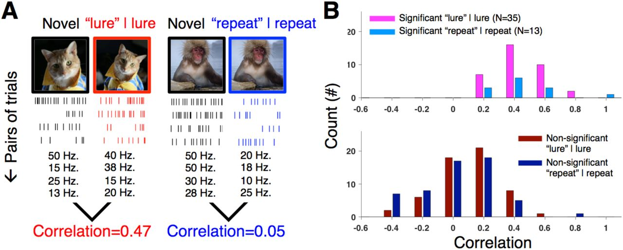 Population coding of pattern separation in the monkey hippocampus