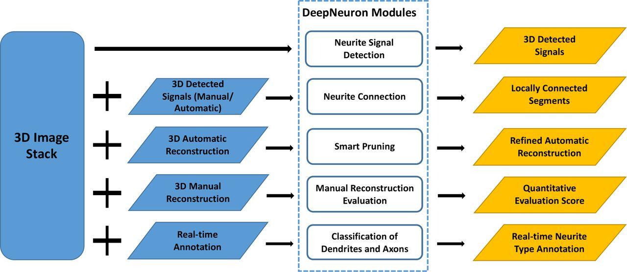 DeepNeuron: An Open Deep Learning Toolbox for Neuron Tracing