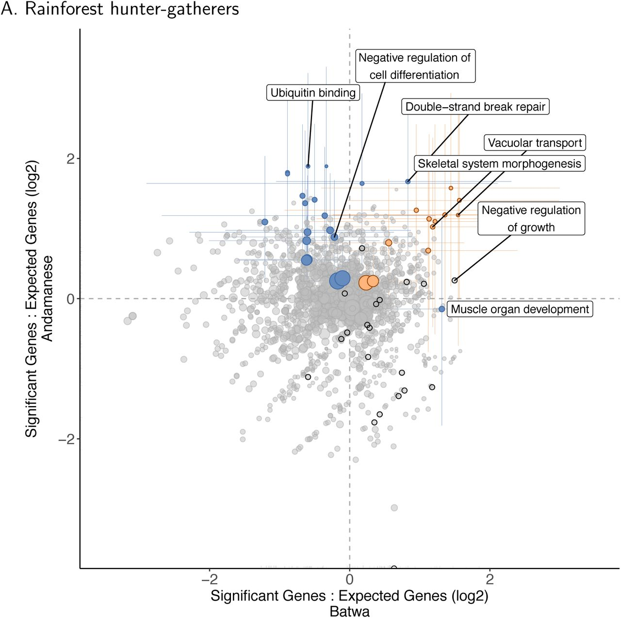 Polygenic adaptation and convergent evolution across both growth and