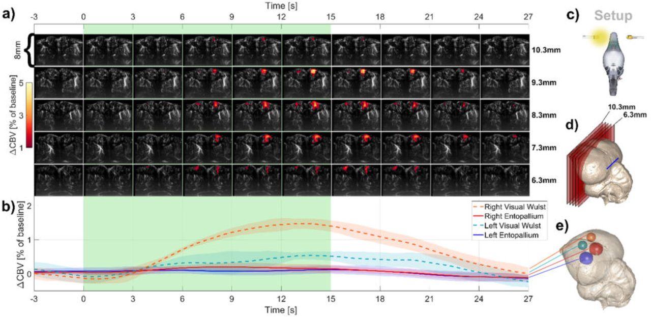 3D Functional Ultrasound Imaging of Pigeons | bioRxiv