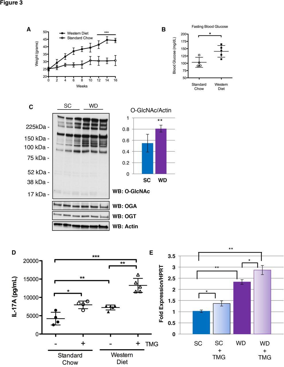 Elevated O-GlcNAcylation Enhances Pro-Inflammatory Th17