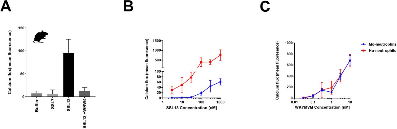 Staphylococcal superantigen-like protein 13 activates