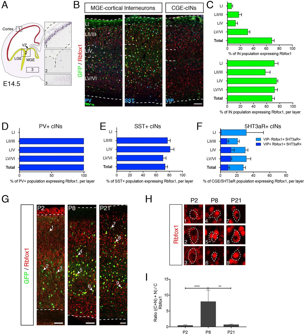 Rbfox1 mediates cell-type-specific splicing in cortical interneurons