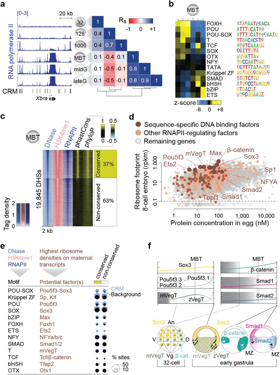 Maternal pluripotency factors prime the zygotic genome to