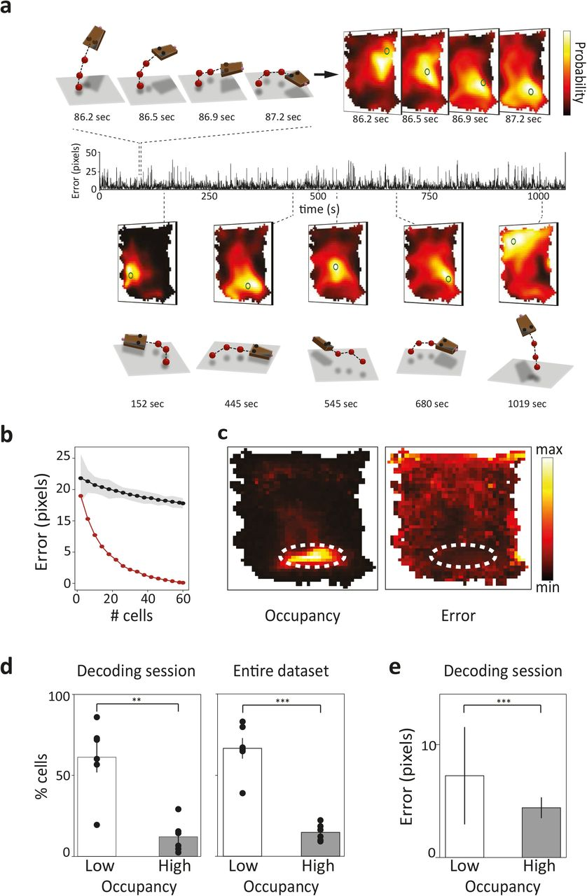 Efficient cortical coding of 3D posture in freely behaving
