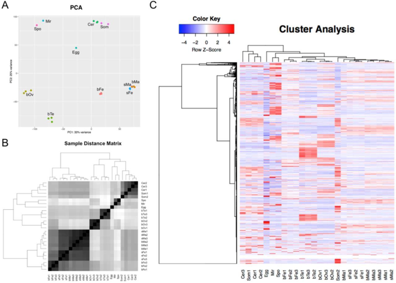 Meta-analysis of RNA-seq studies reveals genes responsible