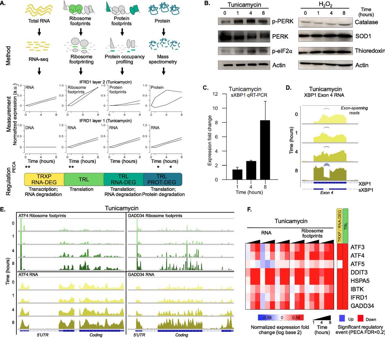 Quantifying multi-layered expression regulation in response