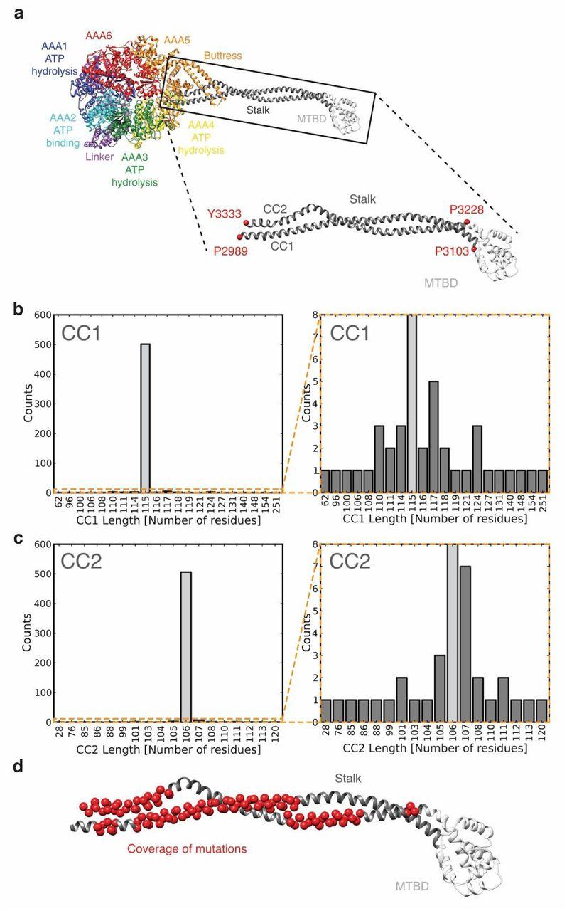 Stalk-mediated communication in the dynein motor domain   bioRxiv