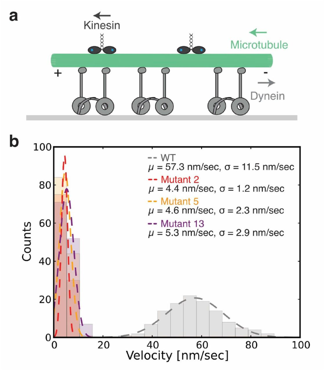 Stalk-mediated communication in the dynein motor domain