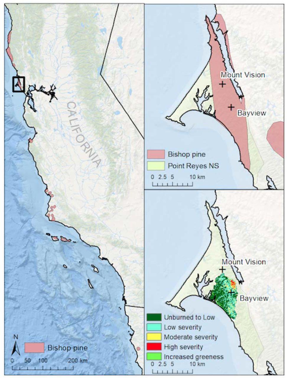 Disturbance macroecology: integrating disturbance ecology