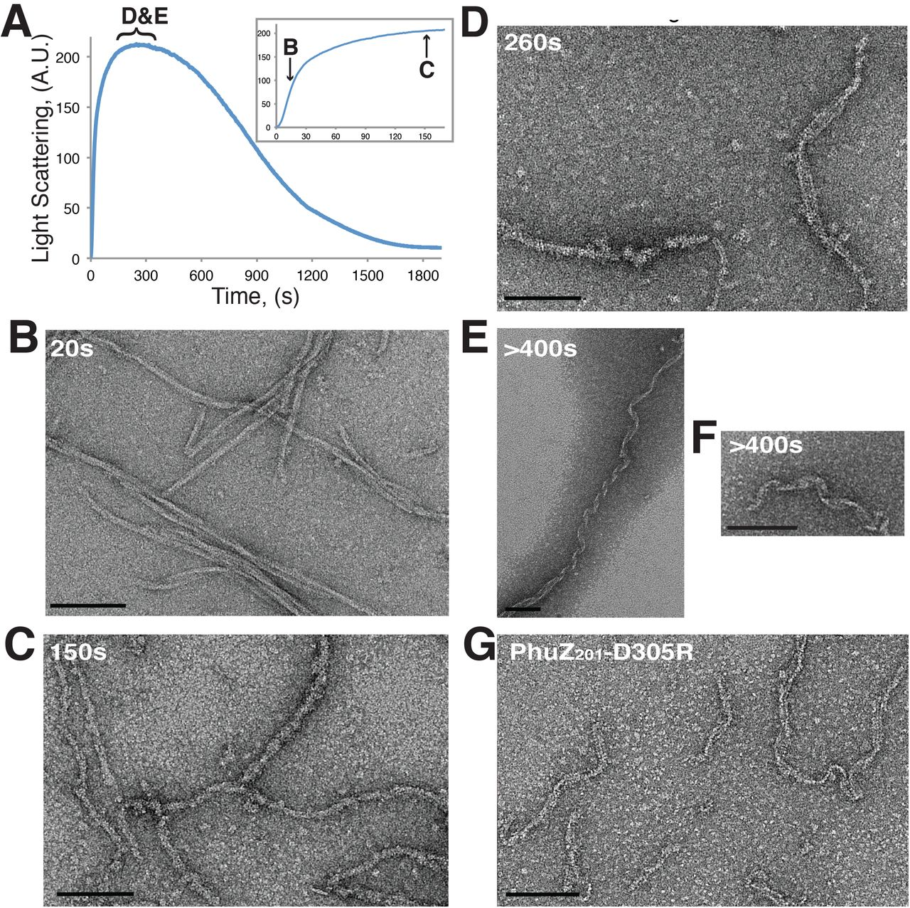 Mechanistic Origins of Dynamic Instability in Filaments from