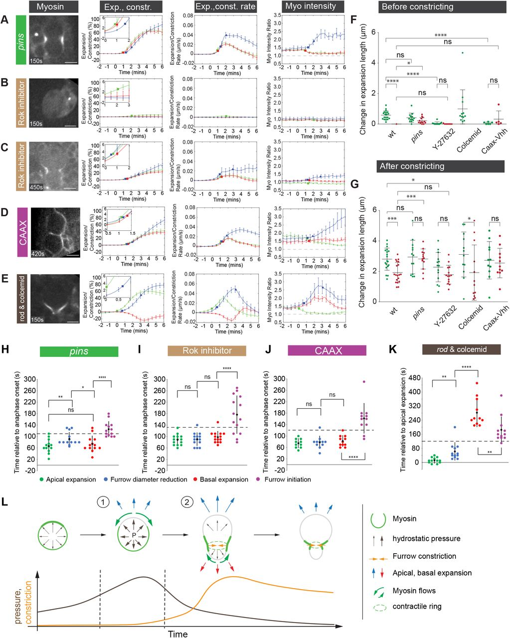 Spatiotemporally controlled Myosin relocalization and internal
