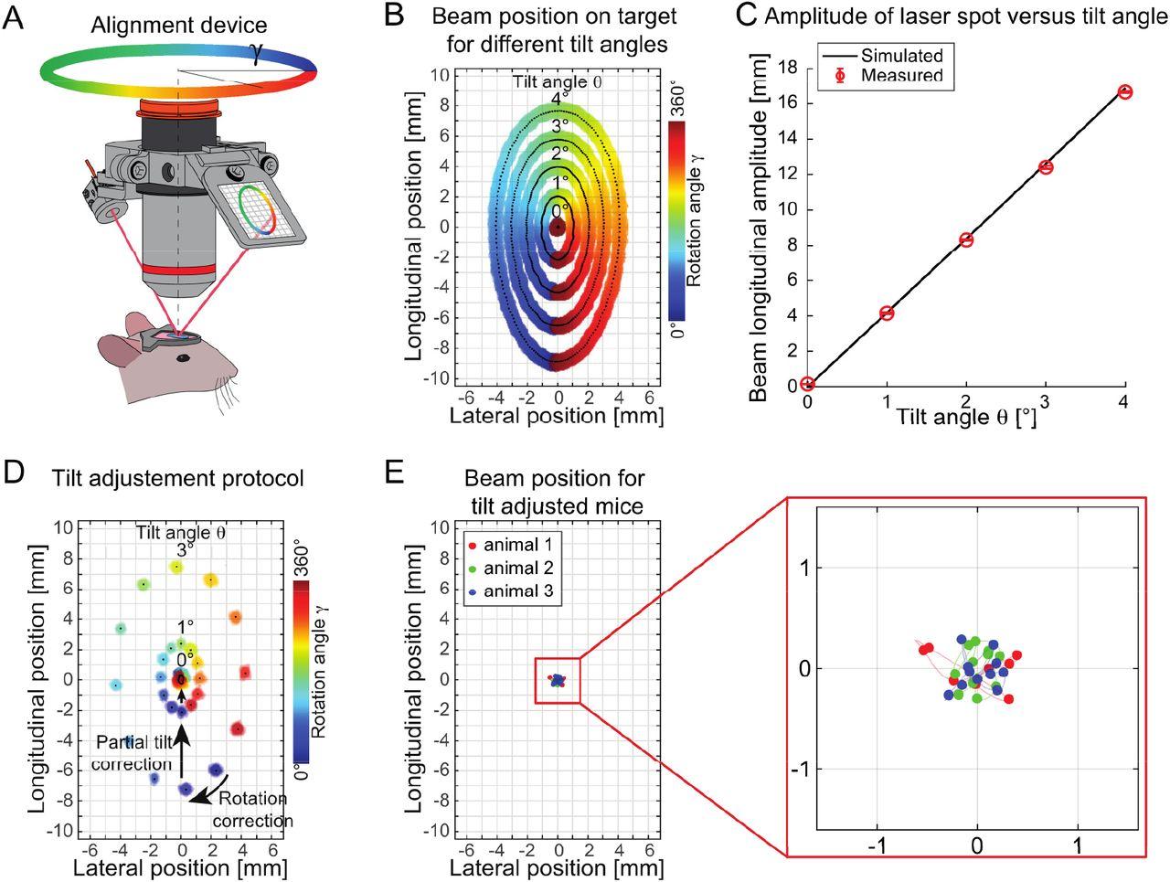 Optical alignment device for two-photon microscopy | bioRxiv