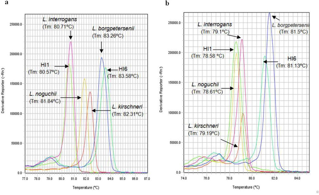 Diagnosis of Human Leptospirosis: High Resolution Melting Analysis