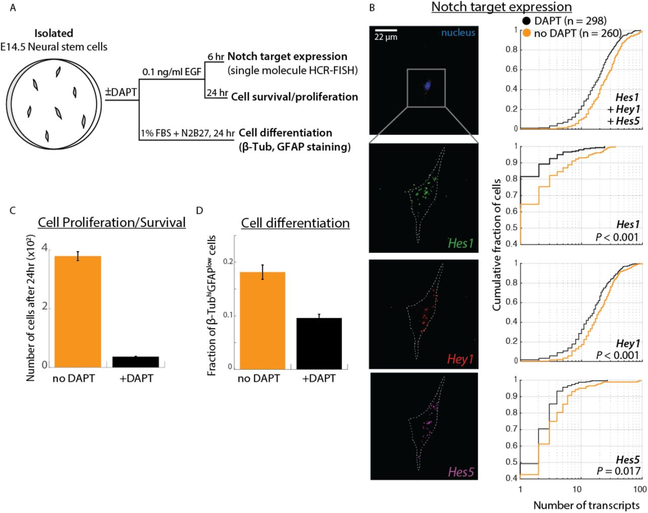 Cis-activation in the Notch signaling pathway   bioRxiv