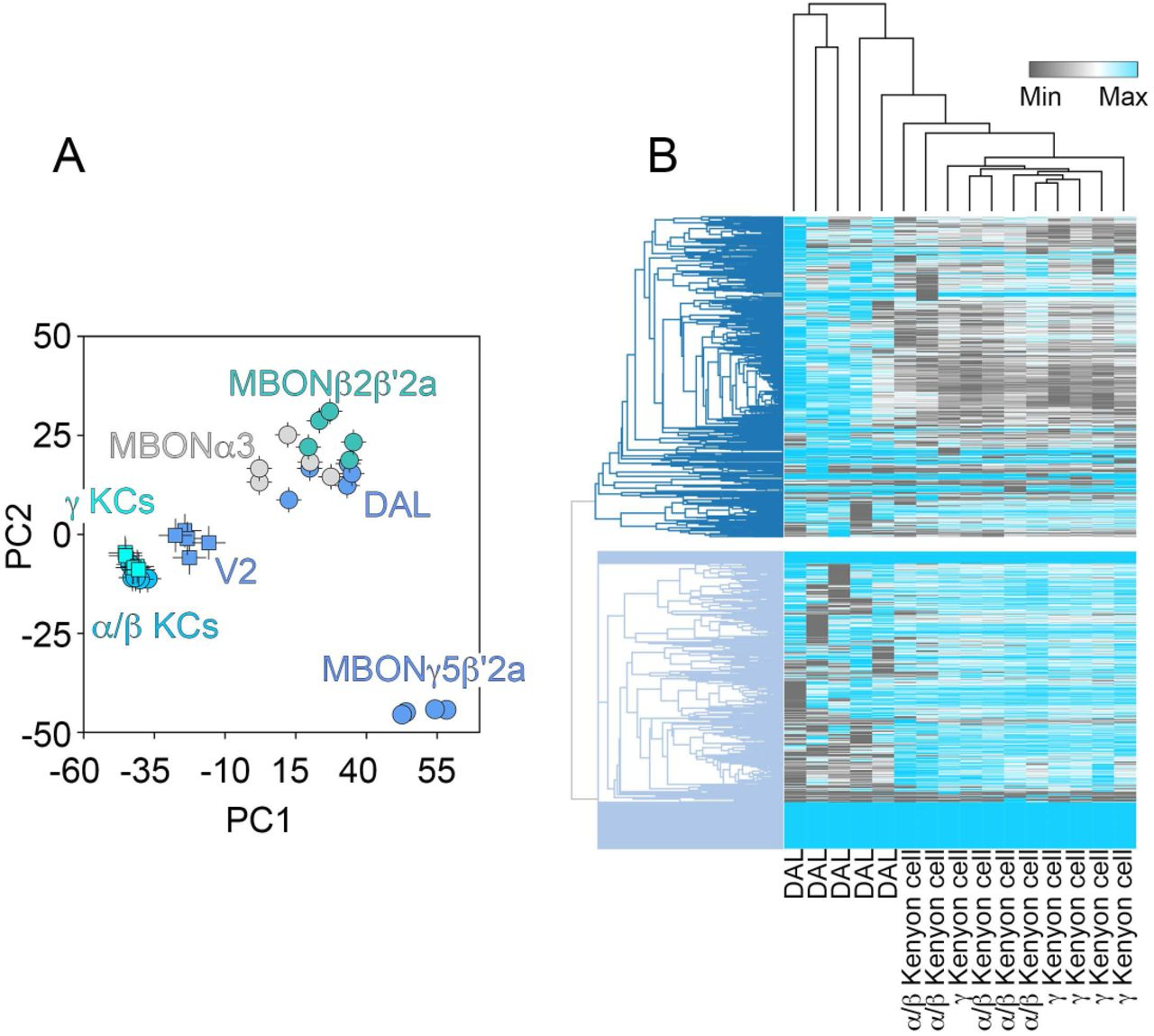 Systems Analysis of the 22q11 2 Microdeletion Syndrome