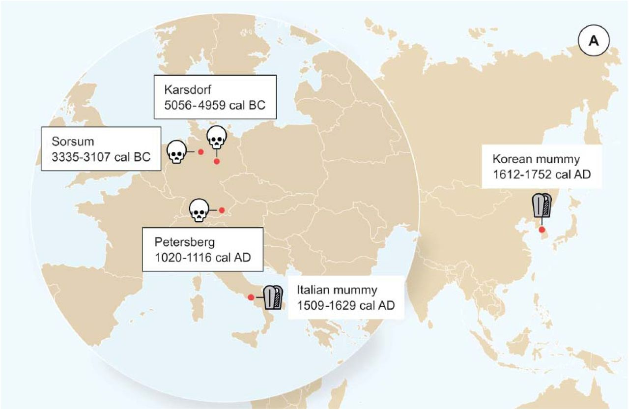 Neolithic and Medieval virus genomes reveal complex