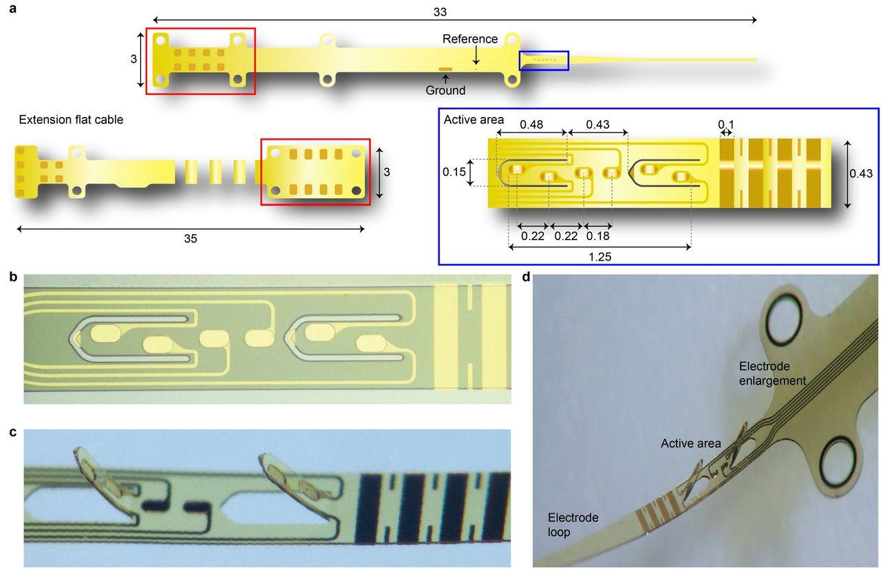 Optic nerve intraneural stimulation allows selective visual