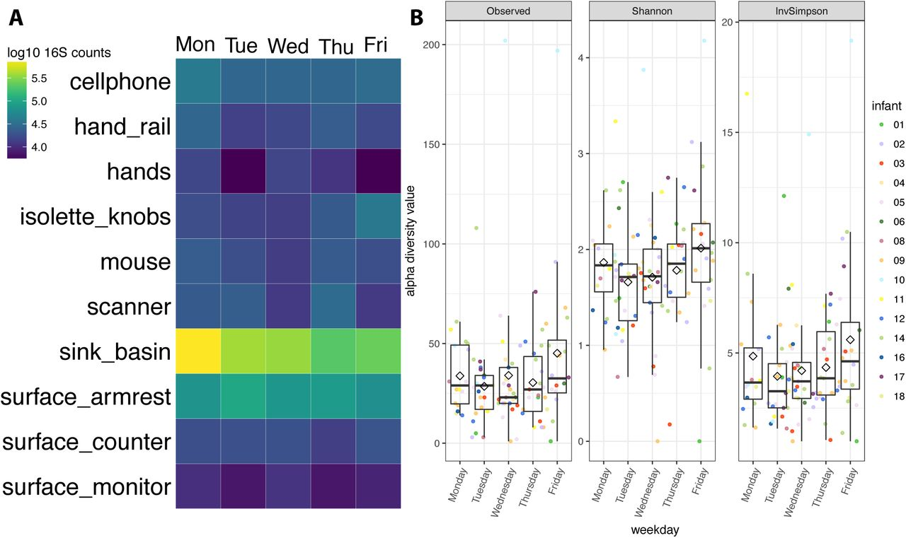 The developing premature infant gut microbiome is a major