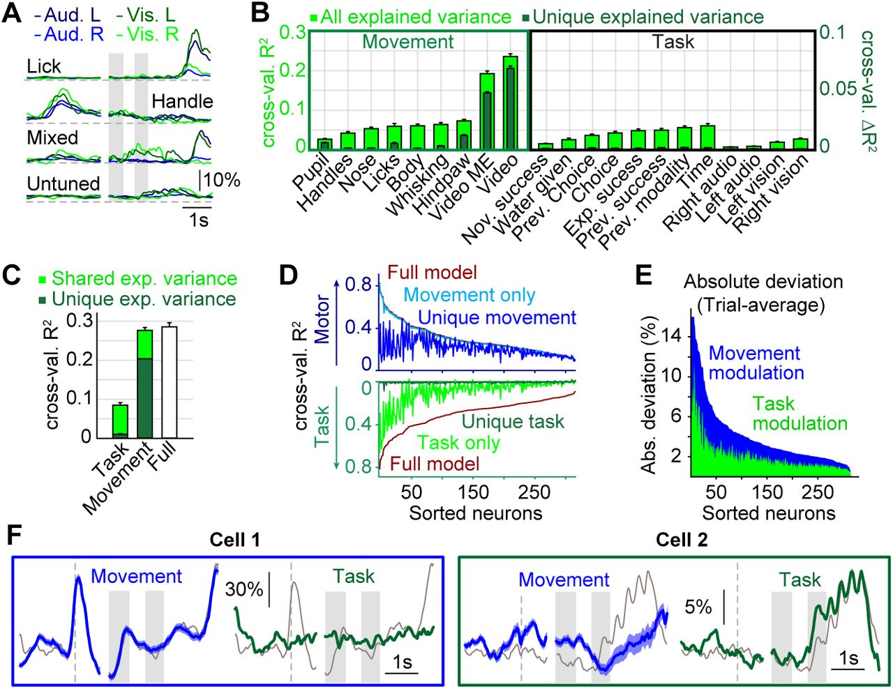 Movement-related activity dominates cortex during sensory