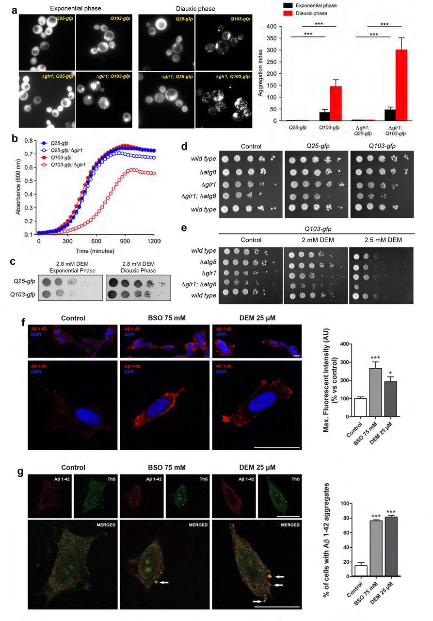 Loss of glutathione redox homeostasis impairs proteostasis