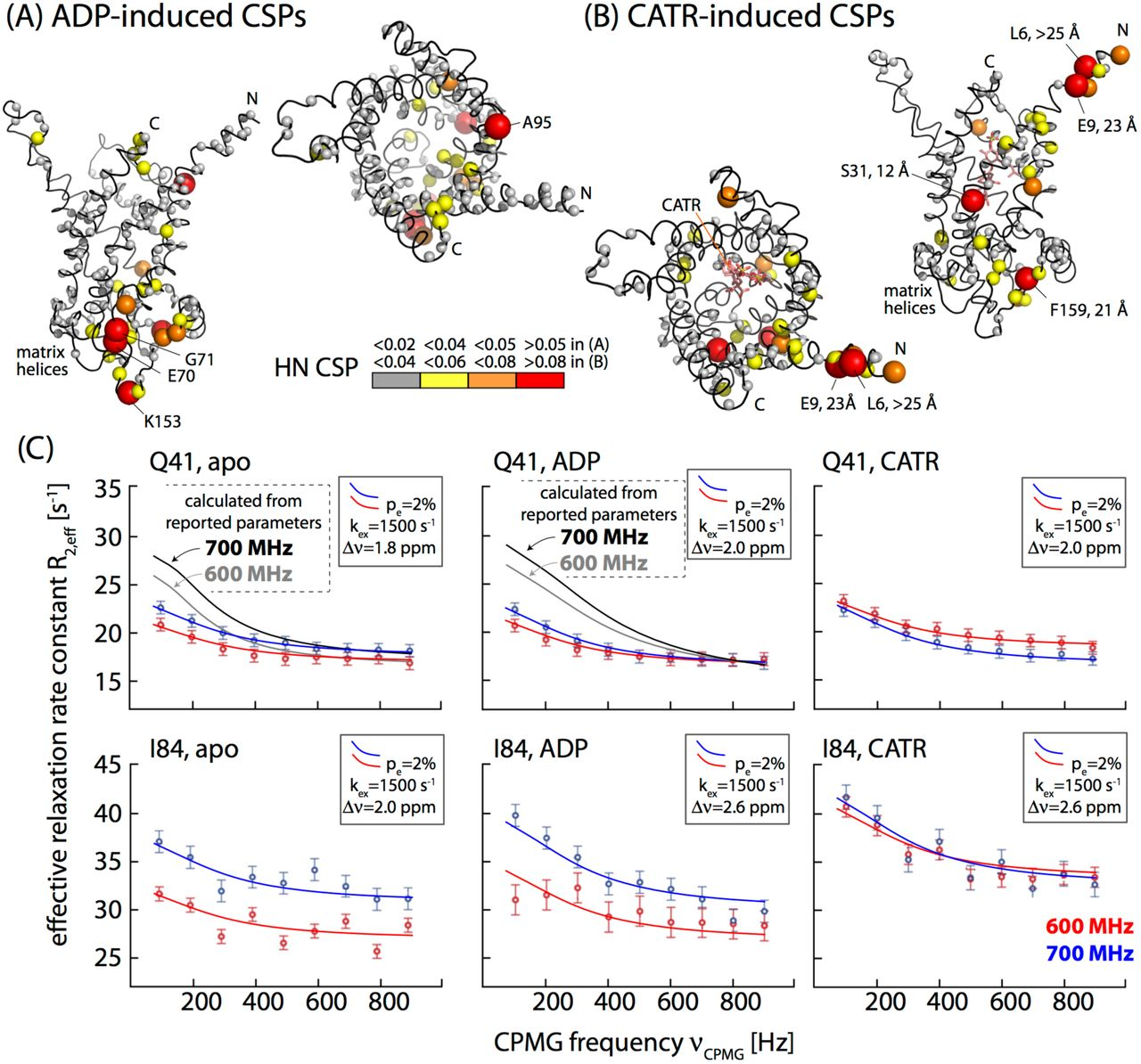 Dynamics and interactions of ADP/ATP transporter AAC3 in DPC
