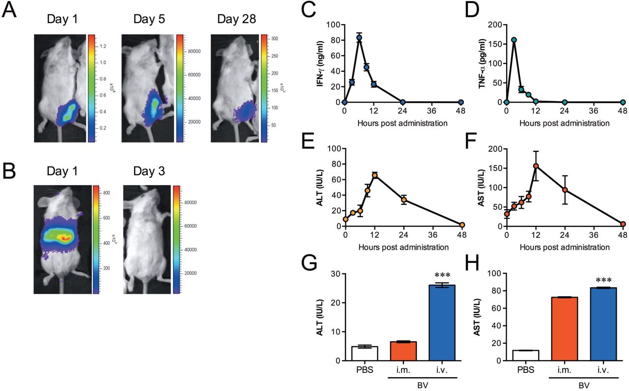 Baculovirus-inducing fast-acting innate immunity kills