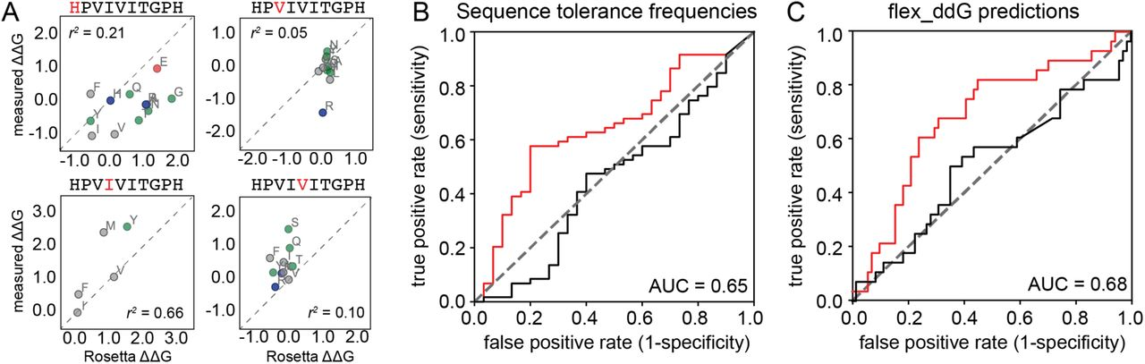 Quantitative mapping of protein-peptide affinity landscapes reveals
