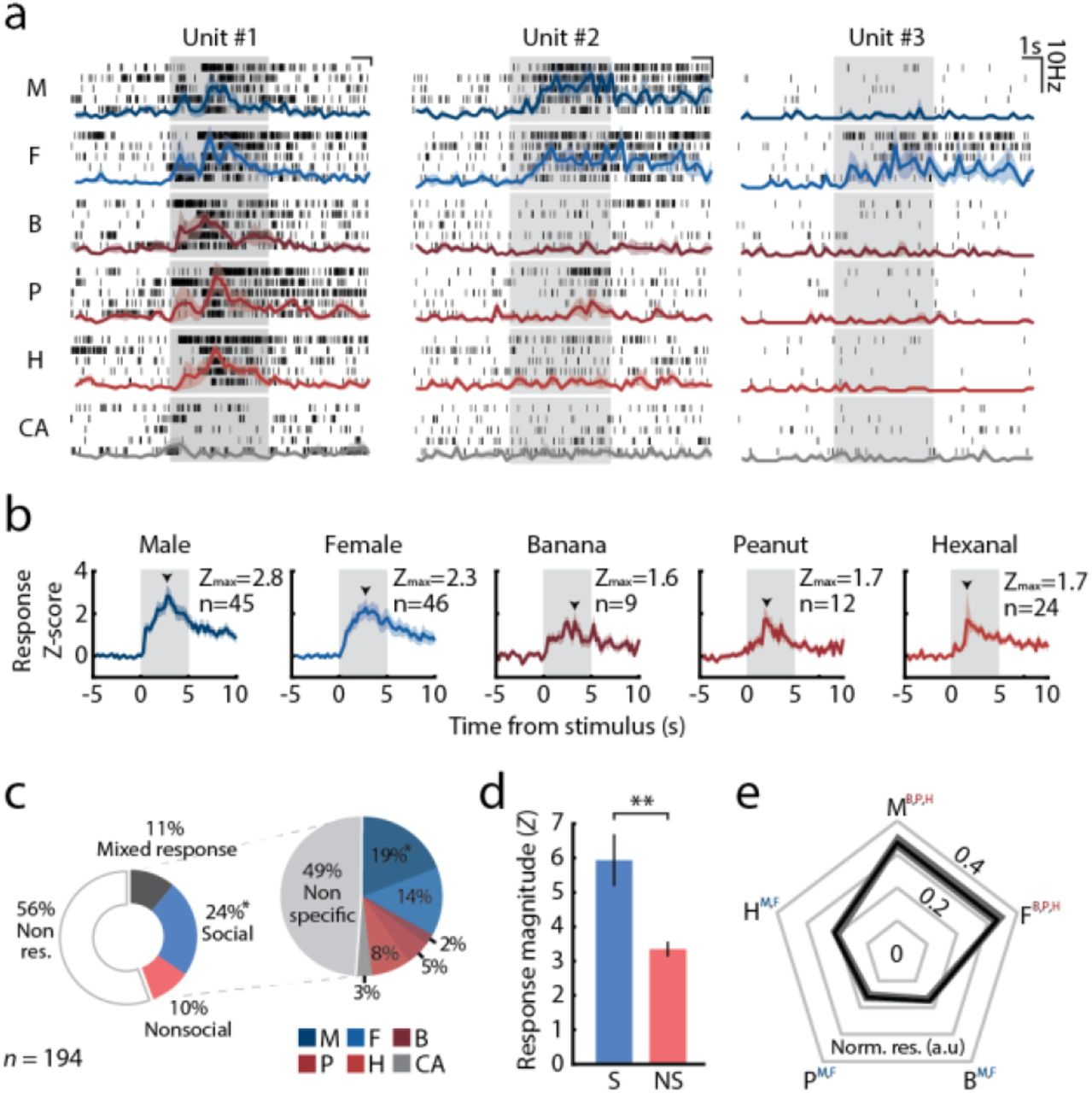 Dynamics Of Social Representation In The Mouse Prefrontal Cortex
