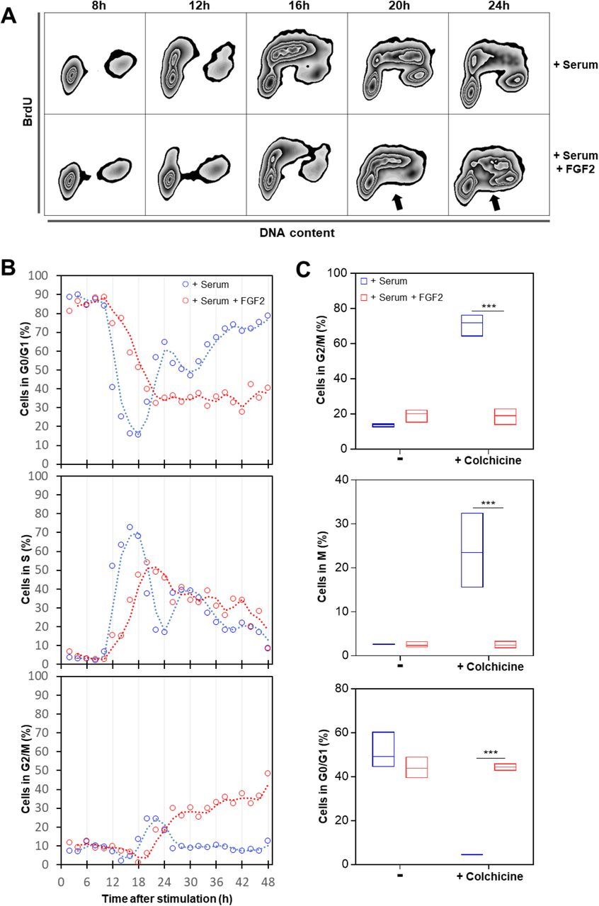 Fibroblast Growth Factor 2 lethally sensitizes cancer cells