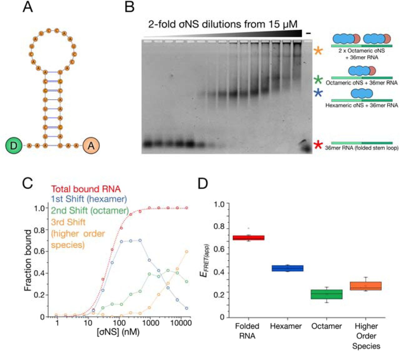 Stability of local secondary structure determines selectivity of