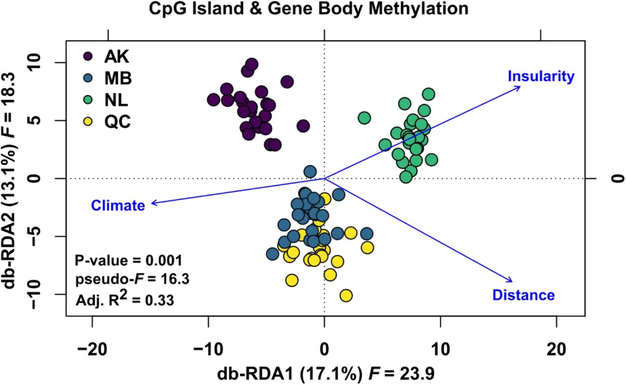 Methylation patterns reveal cryptic structure and a pathway