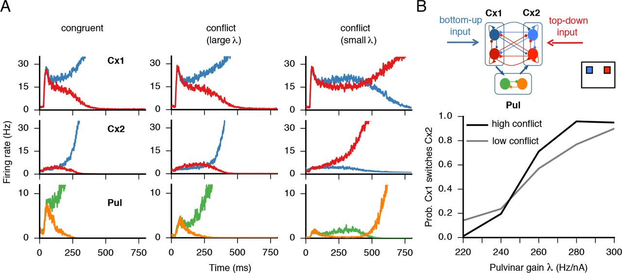 Engagement of pulvino-cortical feedforward and feedback