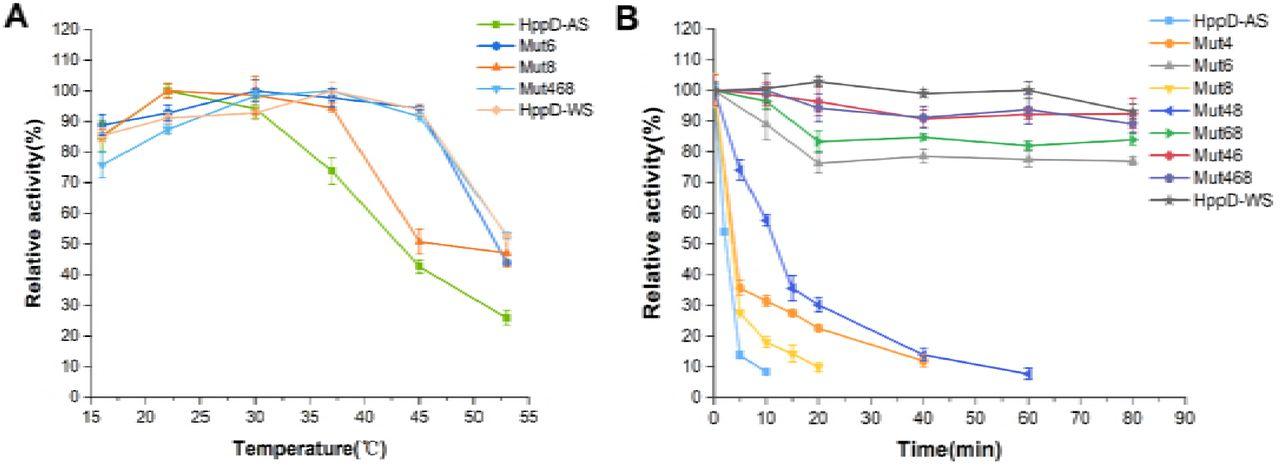 4-hydroxyphenylpyruvate dioxygenase thermolability is responsible