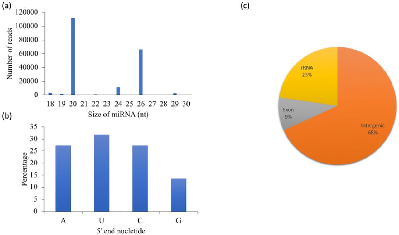 Discovery of microRNA-like RNAs during early fruiting body