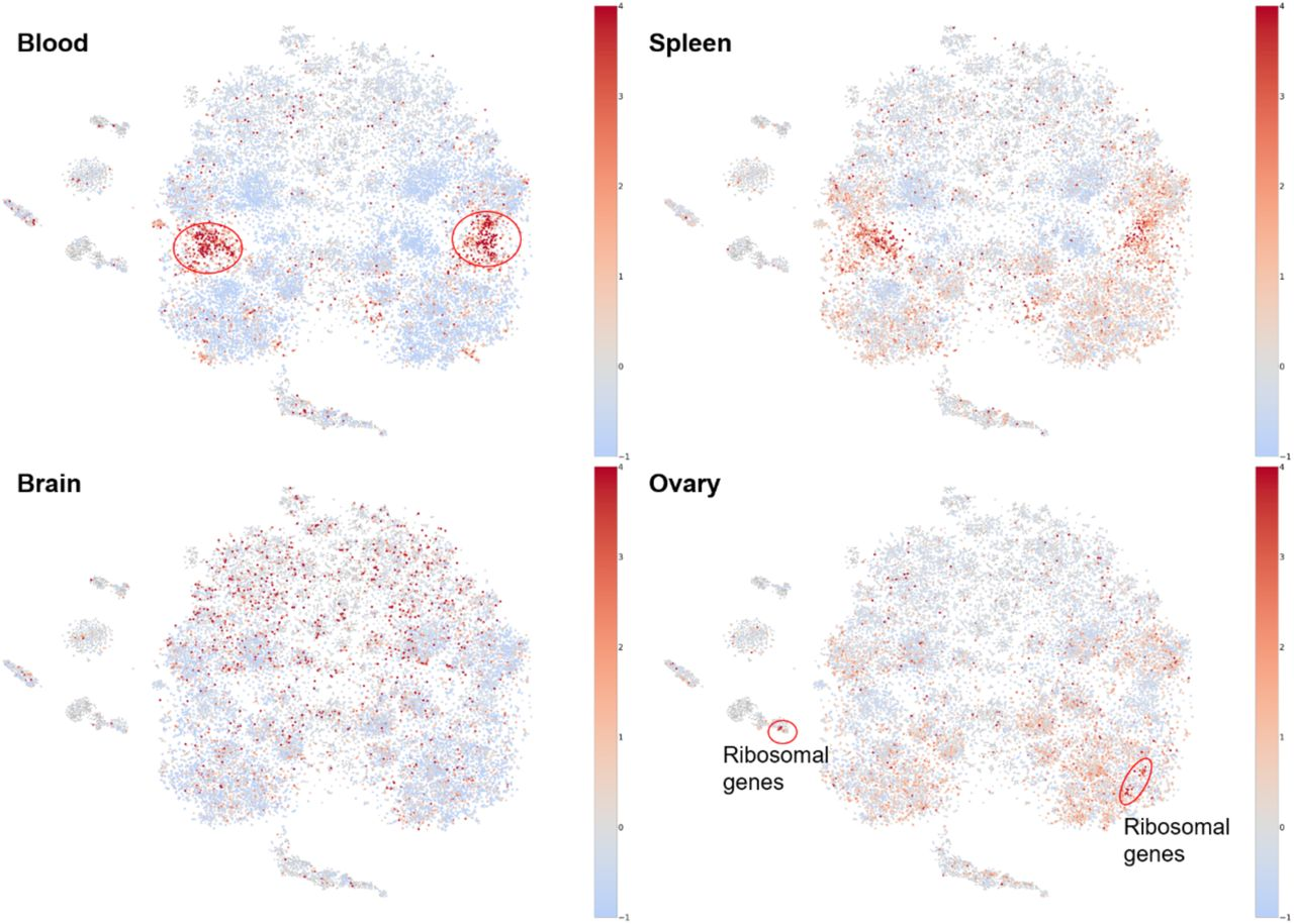 Gene2Vec: Distributed Representation of Genes Based on Co