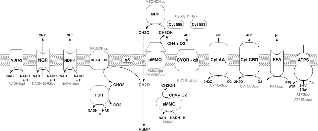 A genome-scale metabolic model for Methylococcus capsulatus