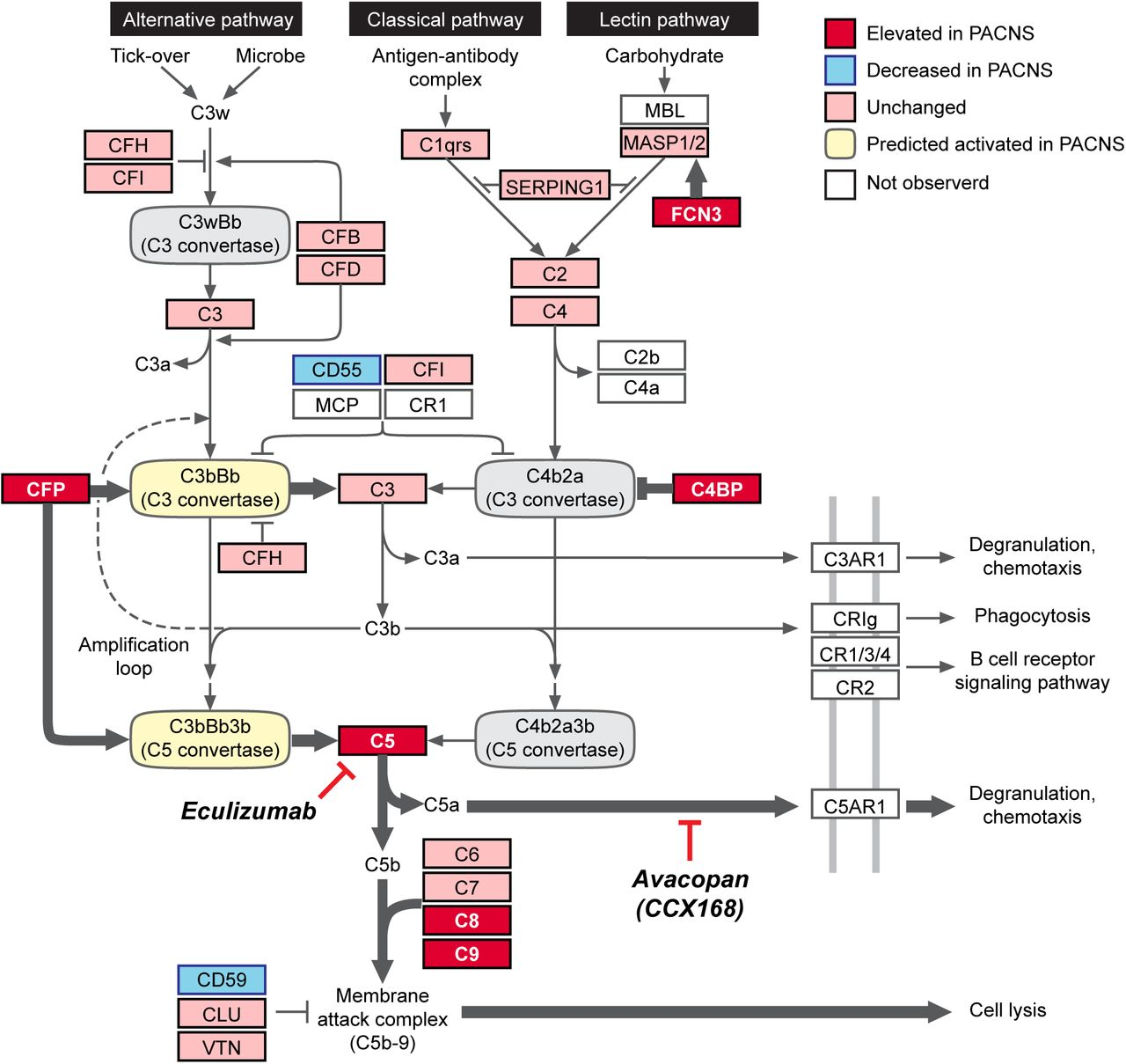 Evidence for Alternative Complement Cascade Activation in