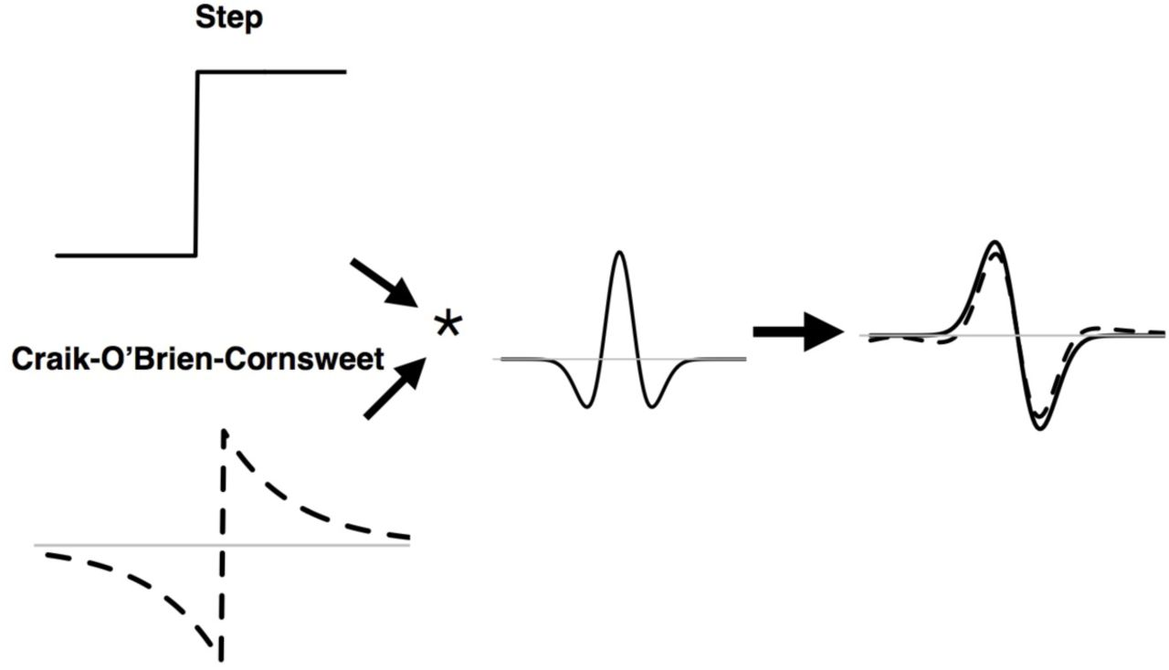 Neural circuits for long-range color filling-in | bioRxiv