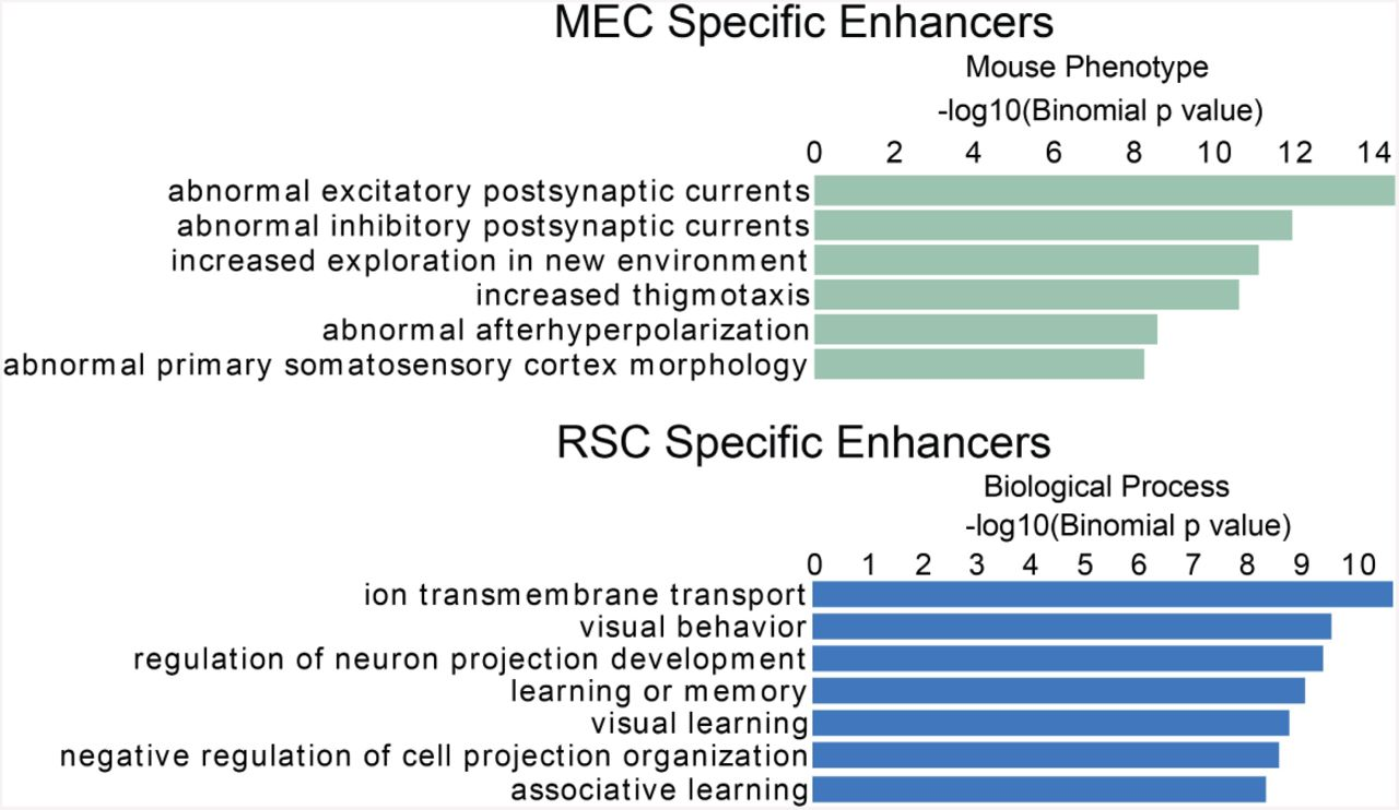 The marked diversity of unique cortical enhancers enables