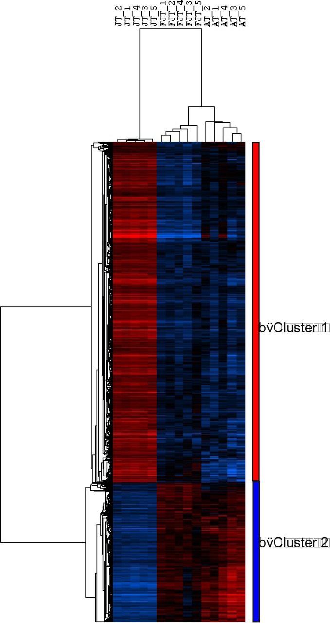 Histological, transcriptomic and in vitro analysis reveal an