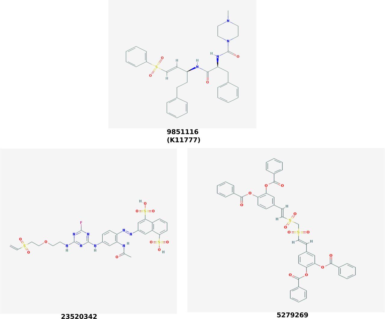 Identification and design of vinyl sulfone inhibitors