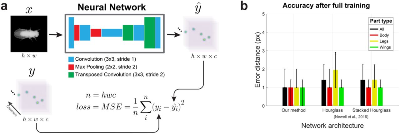 Fast animal pose estimation using deep neural networks | bioRxiv