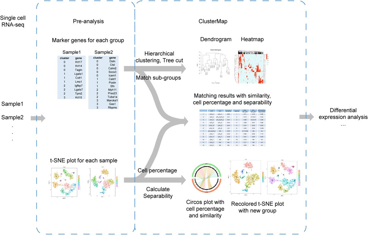 ClusterMap: Compare analysis across multiple Single Cell RNA-Seq ...