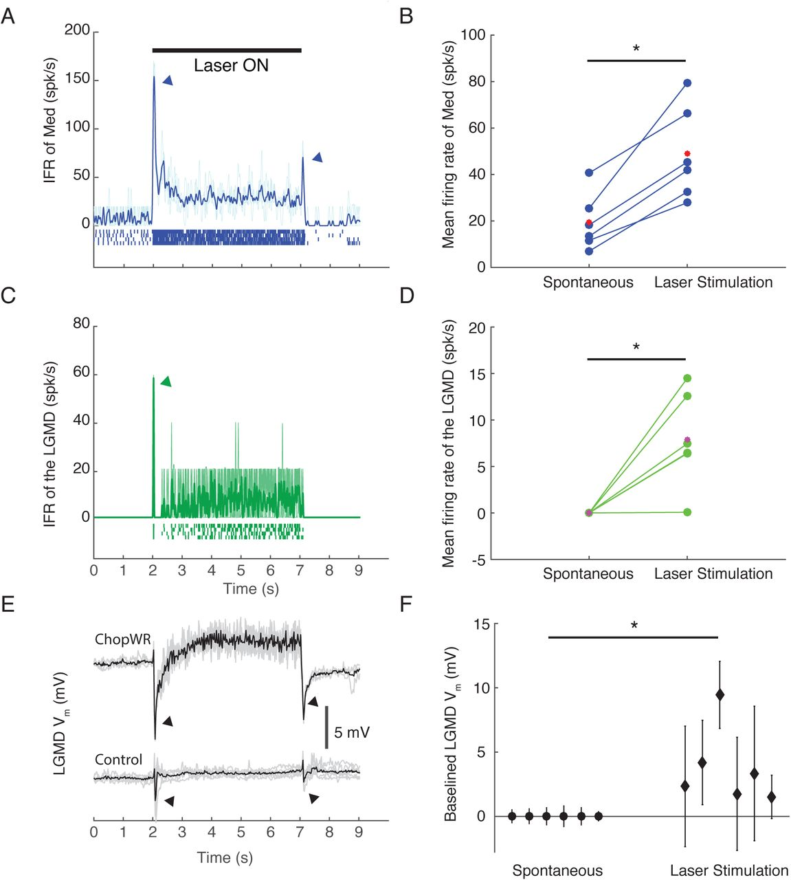 Optogenetic manipulation of medullary neurons in the locust