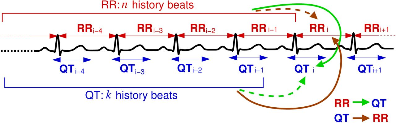 Information transfer in QT-RR dynamics: Application to QT-correction