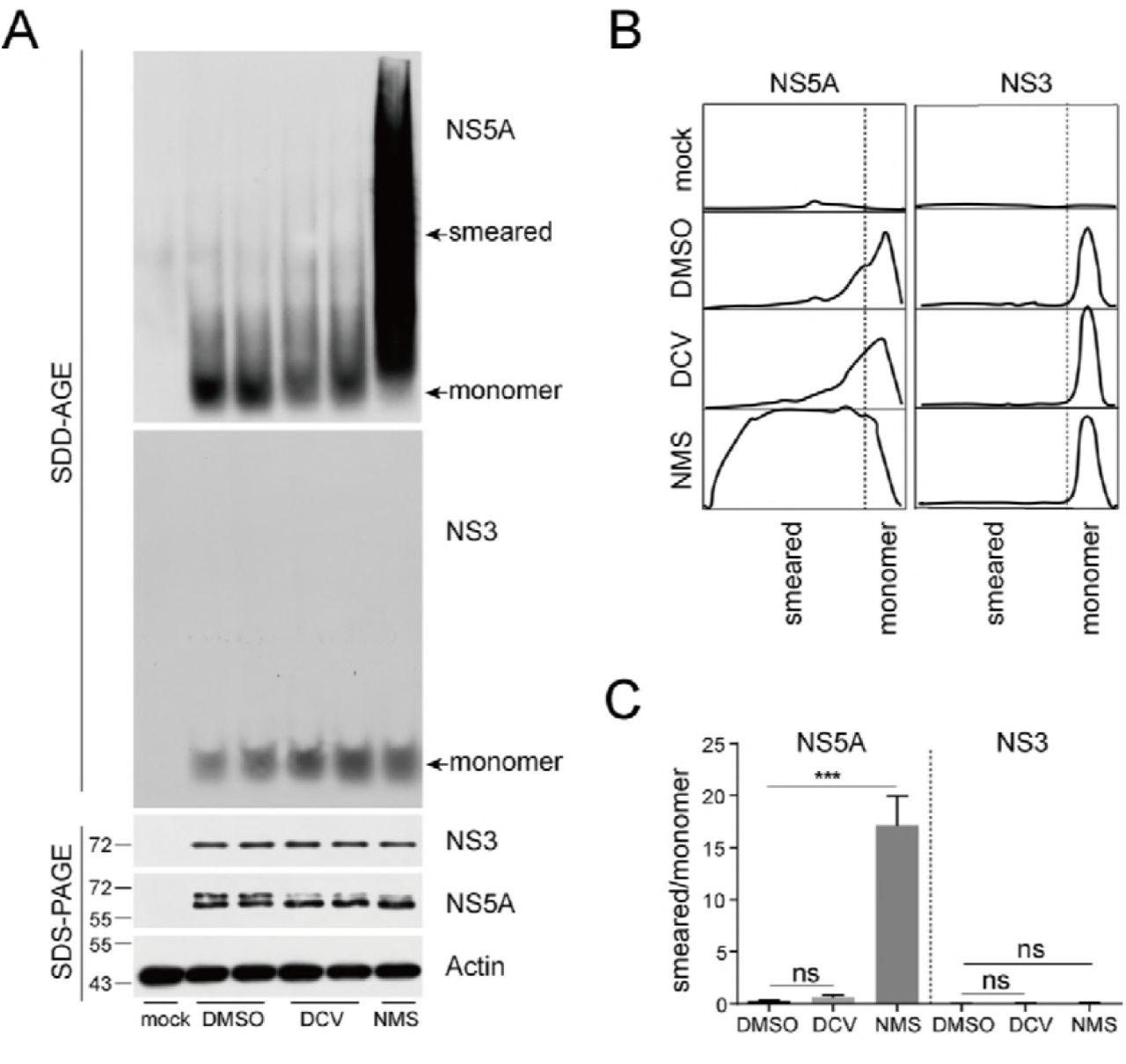 Hepatitis C virus NS5A inhibitor daclatasvir allosterically