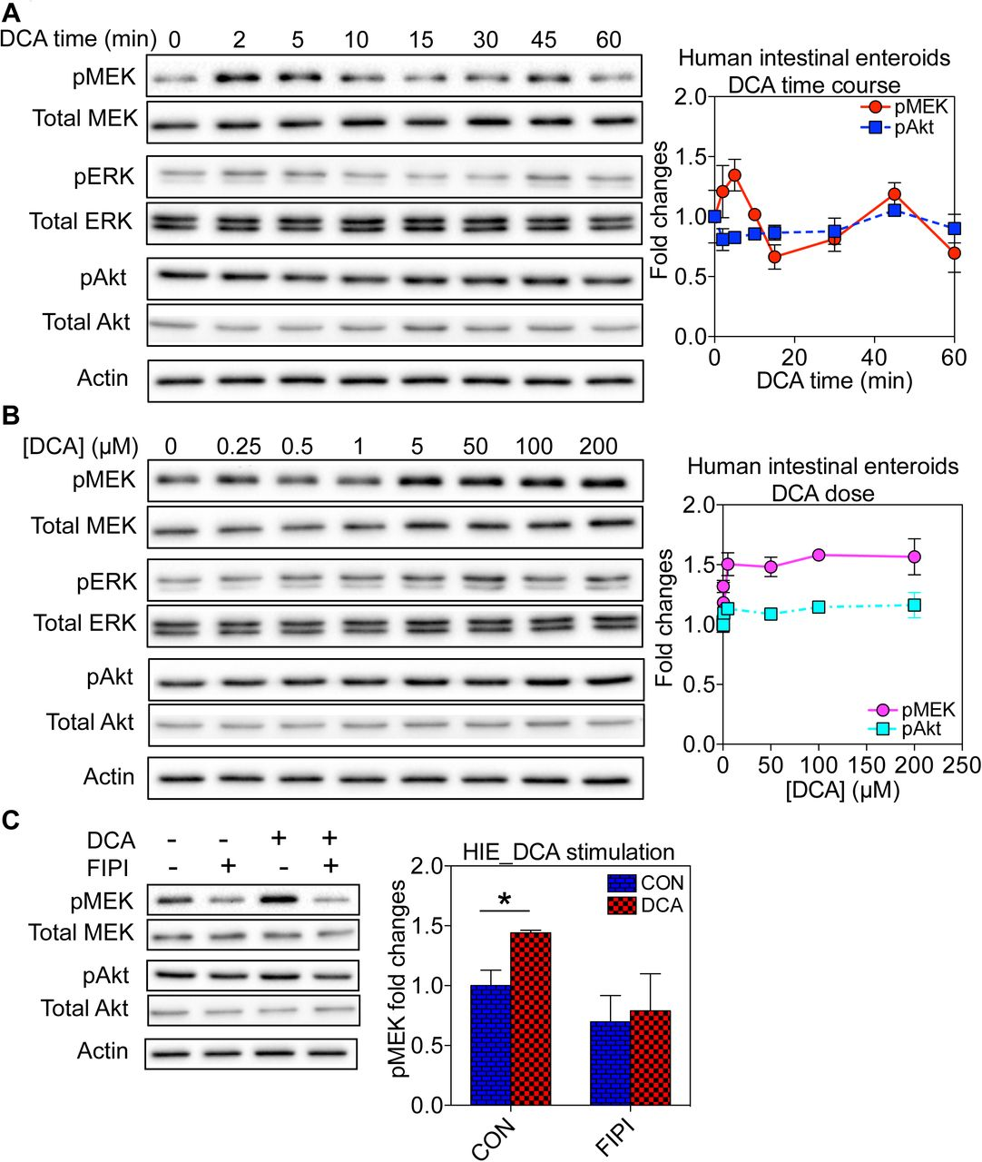 Bile acids target proteolipid nano-assemblies of EGFR and