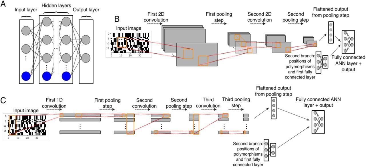 The Unreasonable Effectiveness of Convolutional Neural