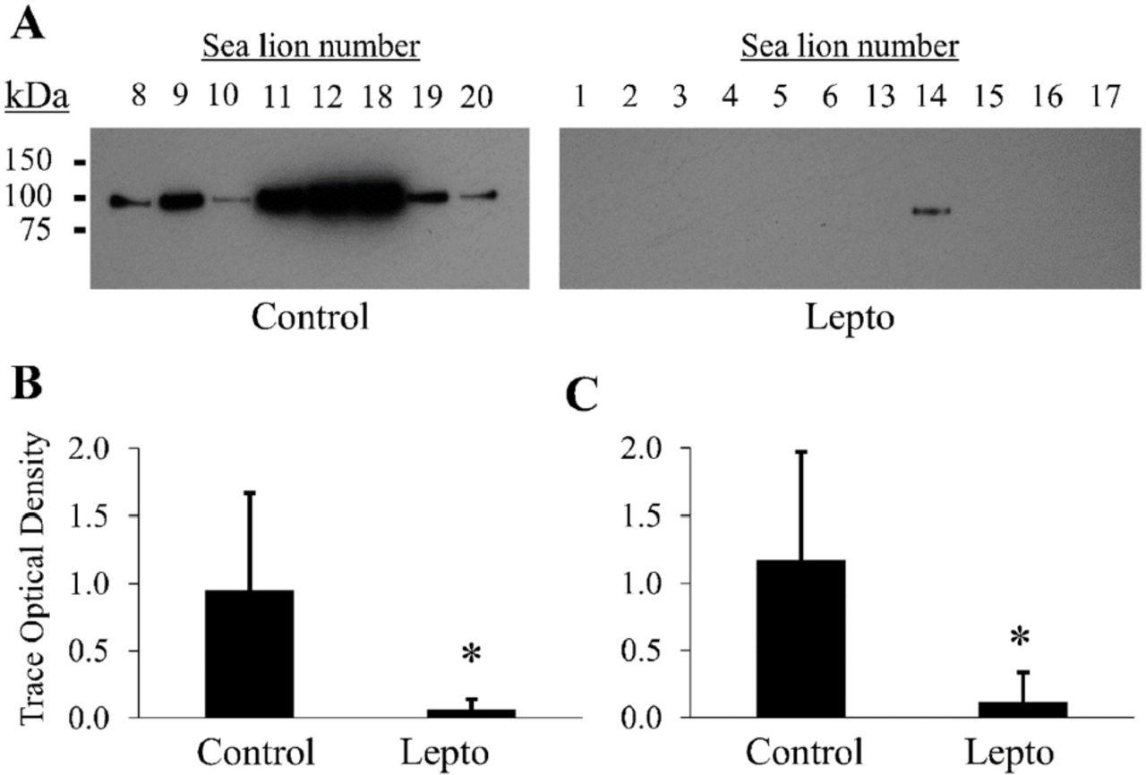 Proteomic Analysis of Urine from California Sea Lions
